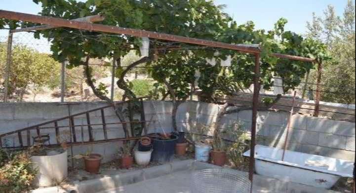 House in La Alfoquía